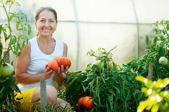 dame i drivhus med tomater