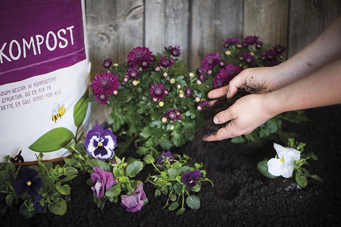Blomster og kompostjord