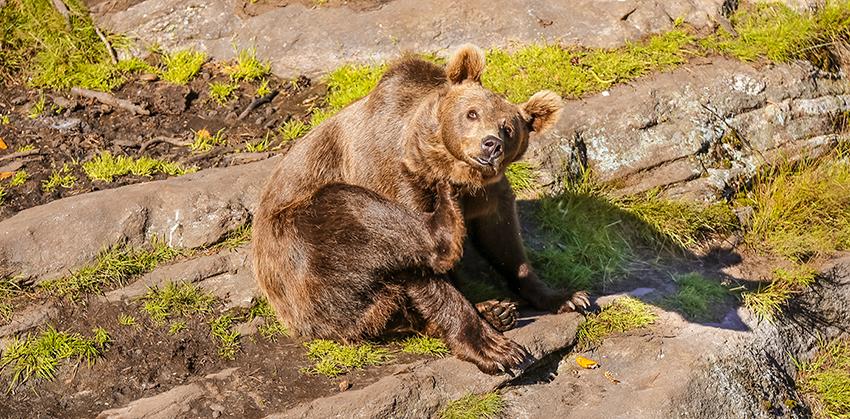 bjørn i bjørneparken